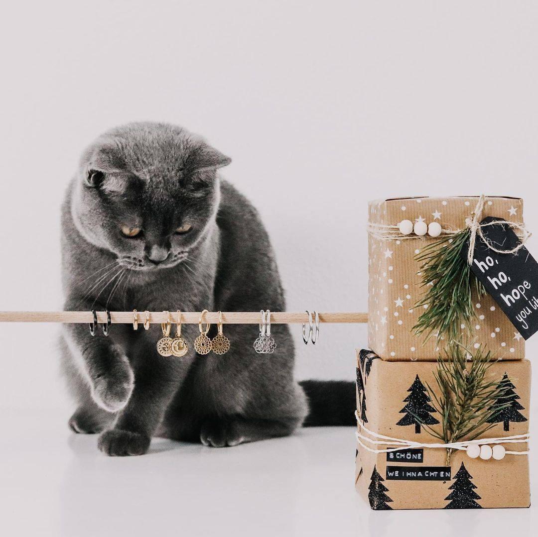Zeigt mal her eure Katzen/Kater?!    Unser neuer Lieblingsaccount @my.name.is.jo